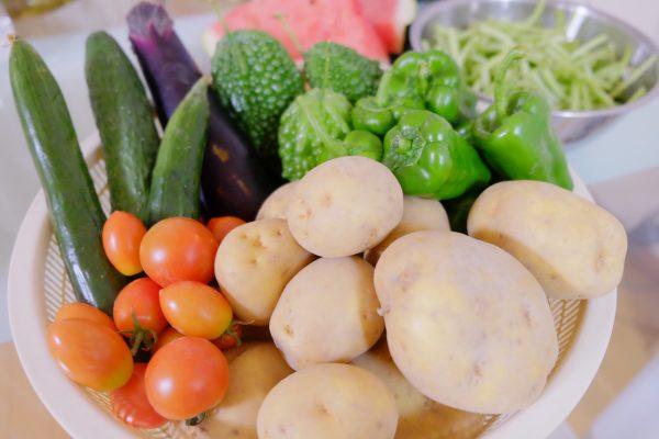 夏野菜の恵み